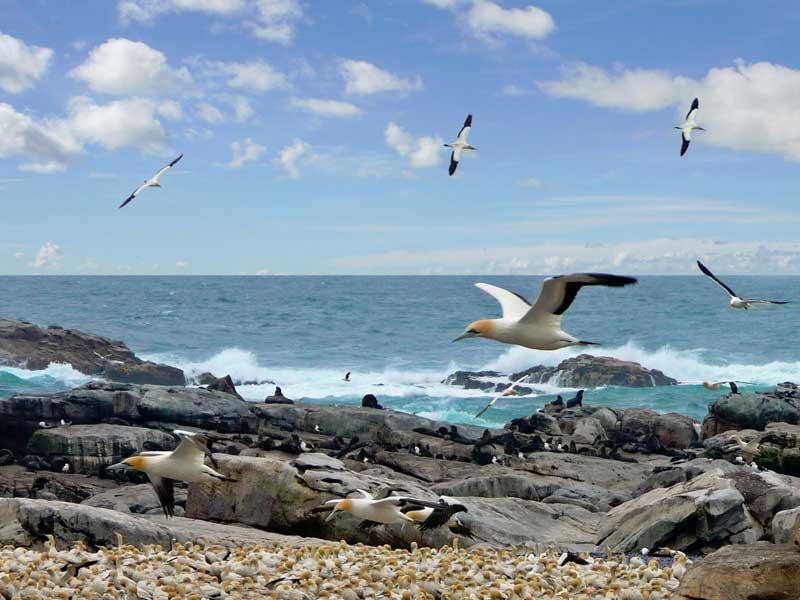 Fjäderfän vet om att det går snabbast att flyga till Sydafrika