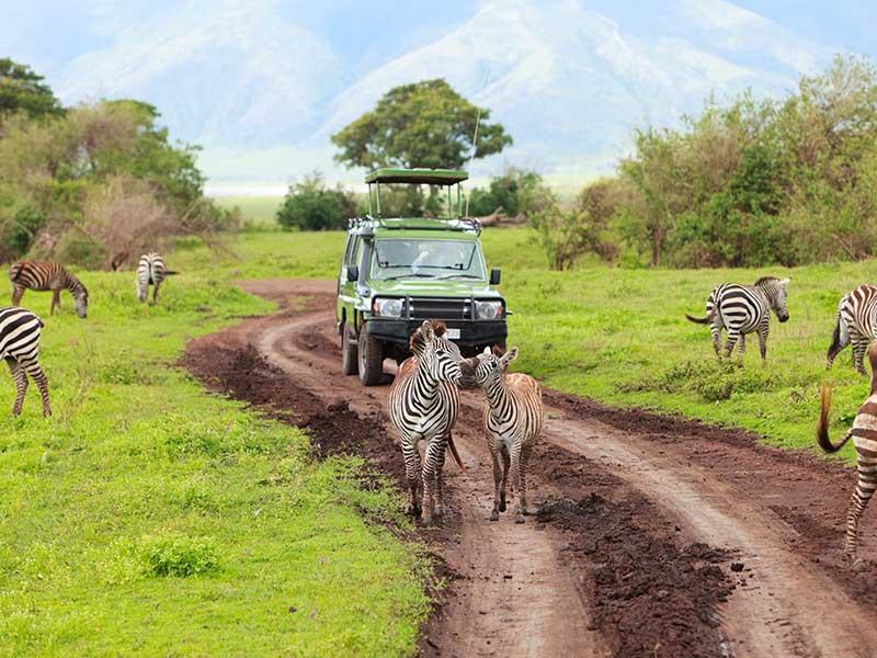 Krugerparken är Sydafrikas största nationalpark