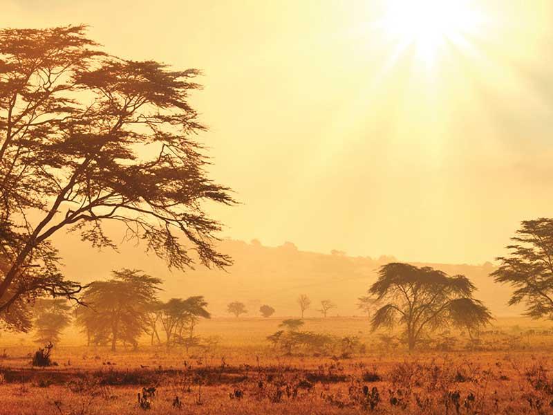 Savannen i Sydafrika kan vara väldigt varm