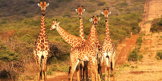 allt-om-sydafrika-safari-sydafrika